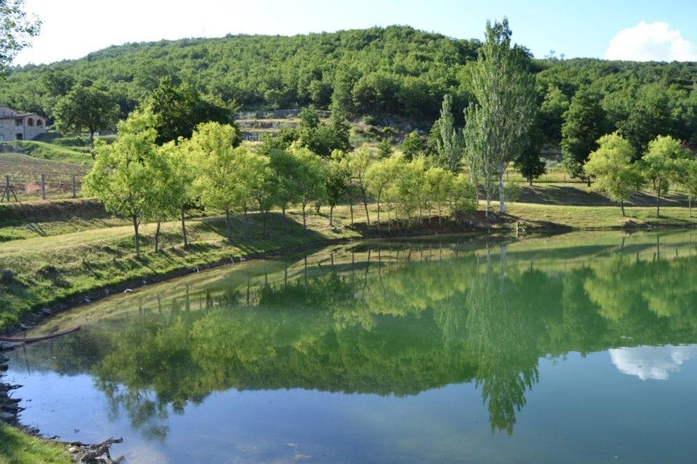 fattoria cuore verde 1907